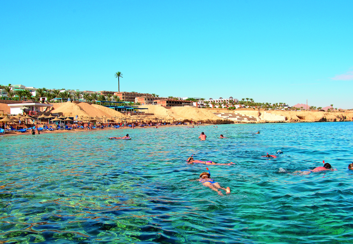 Sharks Bay